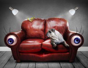 Augensalbe Hund