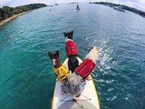 Hunde Schwimmwesten