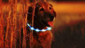 Hundesicherheit