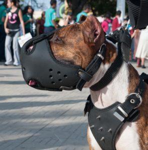 Maulkörbe für Hunde