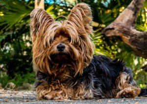Sauberkeitserziehung für Hunde