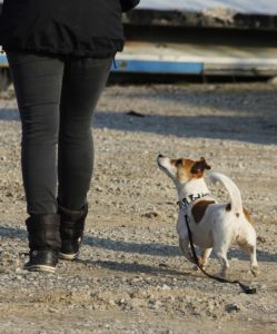 Hundeflüsterer