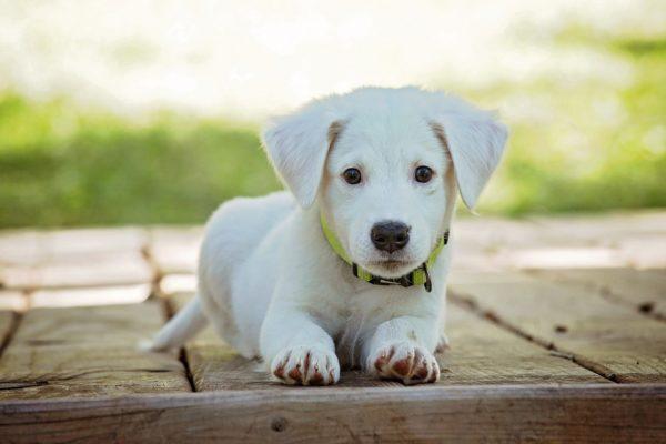 Analentzündung beim Hund